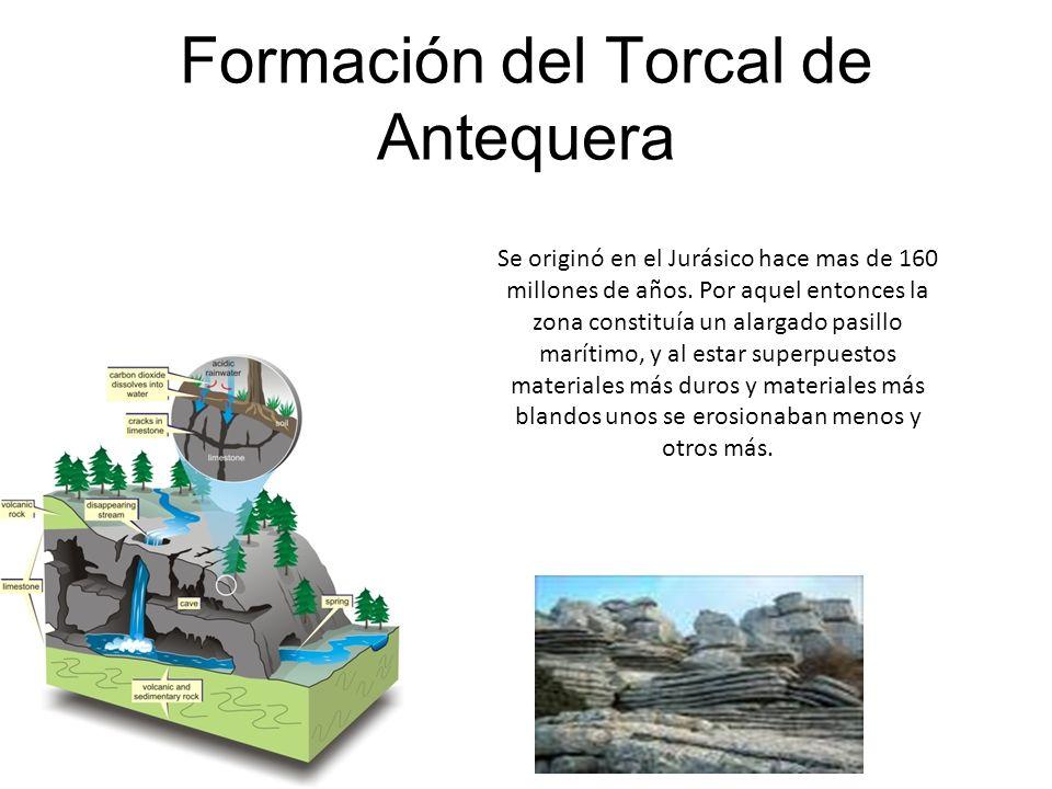 Formación del Torcal de Antequera Se originó en el Jurásico hace mas de 160 millones de años. Por aquel entonces la zona constituía un alargado pasill
