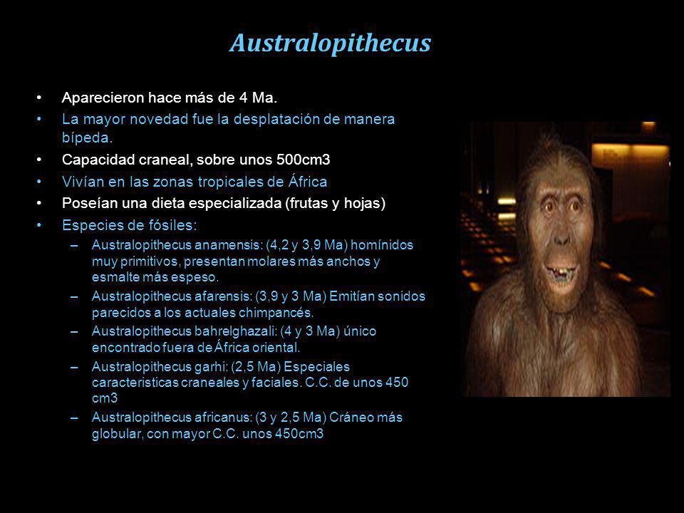 La evolución humana Lo más trascendental en este periodo fue la evolución humana. Al proceso evolutivo se le conoce como hominización. El caminar ergu