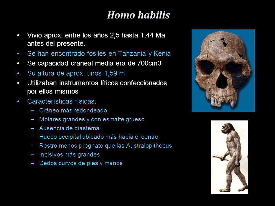 Australopithecus Aparecieron hace más de 4 Ma. La mayor novedad fue la desplatación de manera bípeda. Capacidad craneal, sobre unos 500cm3 Vivían en l