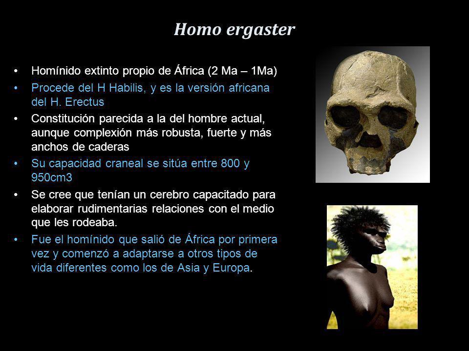 Homo habilis Vivió aprox. entre los años 2,5 hasta 1,44 Ma antes del presente. Se han encontrado fósiles en Tanzania y Kenia Se capacidad craneal medi