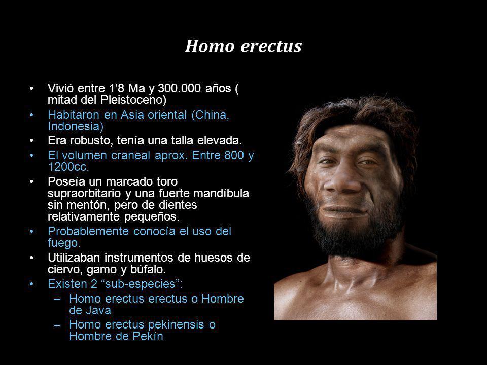 Homo ergaster Homínido extinto propio de África (2 Ma – 1Ma) Procede del H Habilis, y es la versión africana del H. Erectus Constitución parecida a la