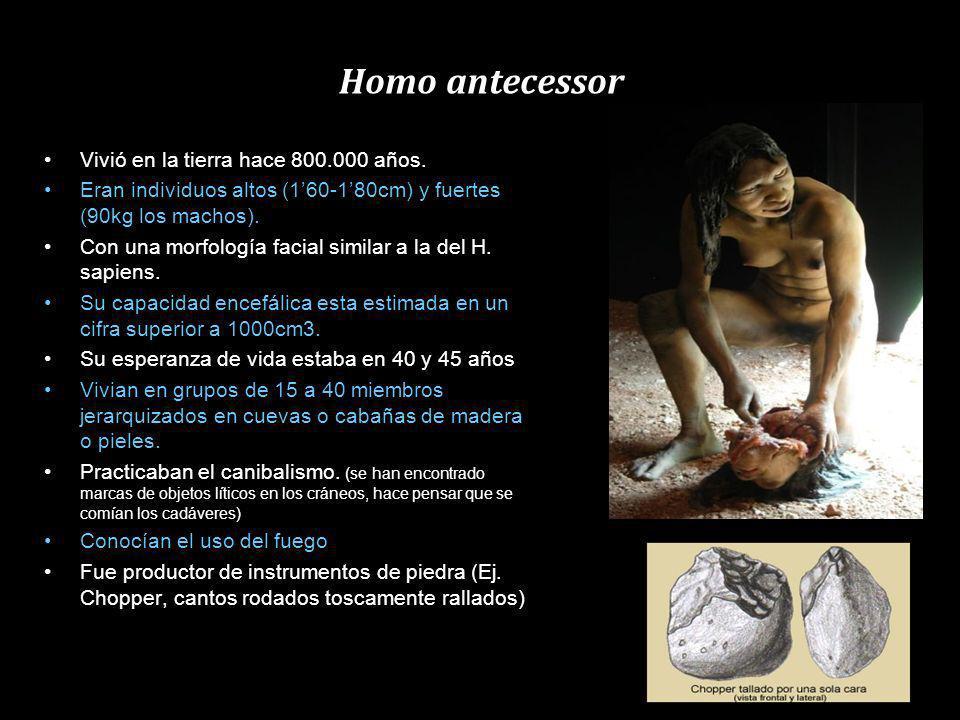 Homo erectus Vivió entre 18 Ma y 300.000 años ( mitad del Pleistoceno) Habitaron en Asia oriental (China, Indonesia) Era robusto, tenía una talla elev
