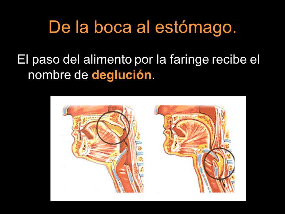 El paso del alimento por la faringe recibe el nombre de deglución.