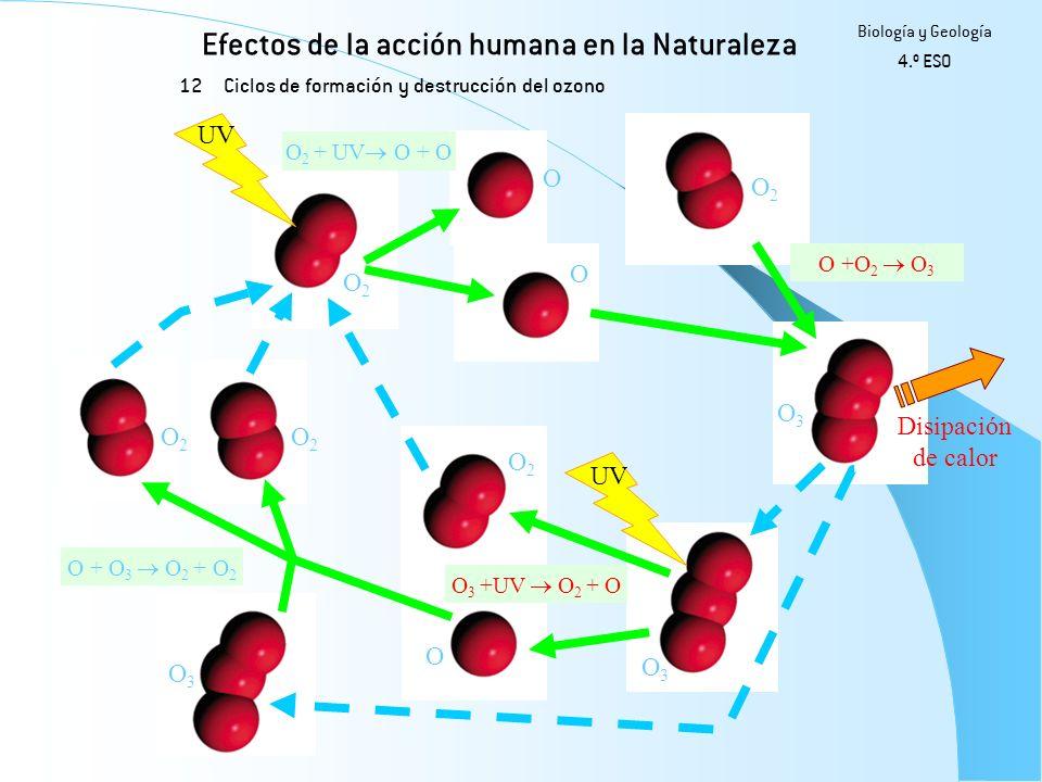 Efectos de la acción humana en la Naturaleza 12 Biología y Geología 4.º ESO Ciclos de formación y destrucción del ozono UV O2O2 O2O2 O2O2 O2O2 O3O3 O3