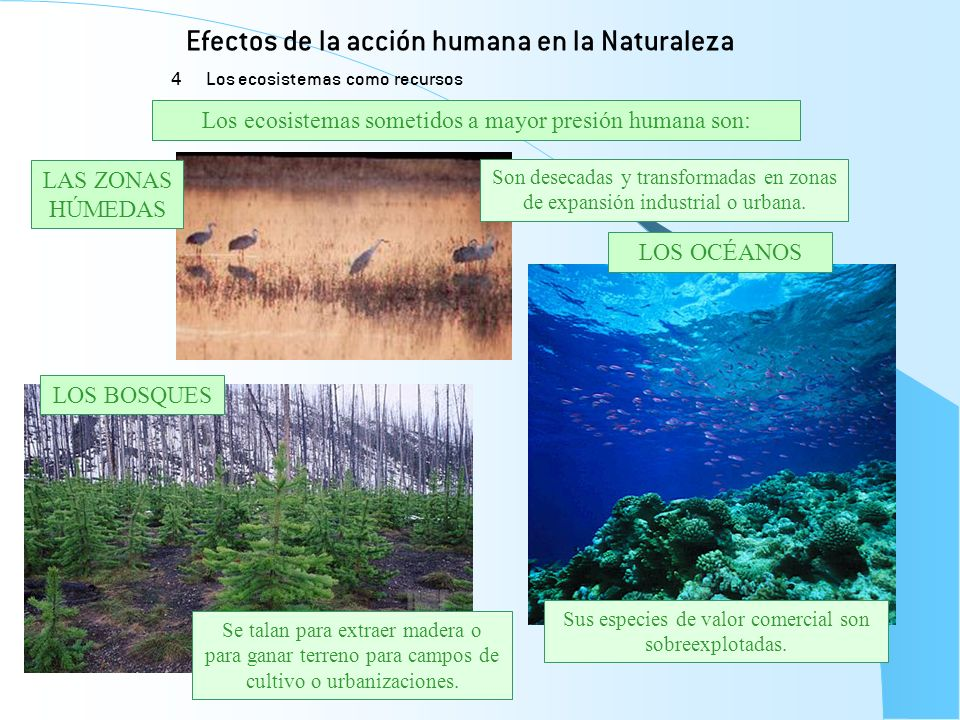 Efectos de la acción humana en la Naturaleza 4 Los ecosistemas como recursos LOS BOSQUES LAS ZONAS HÚMEDAS LOS OCÉANOS Sus especies de valor comercial