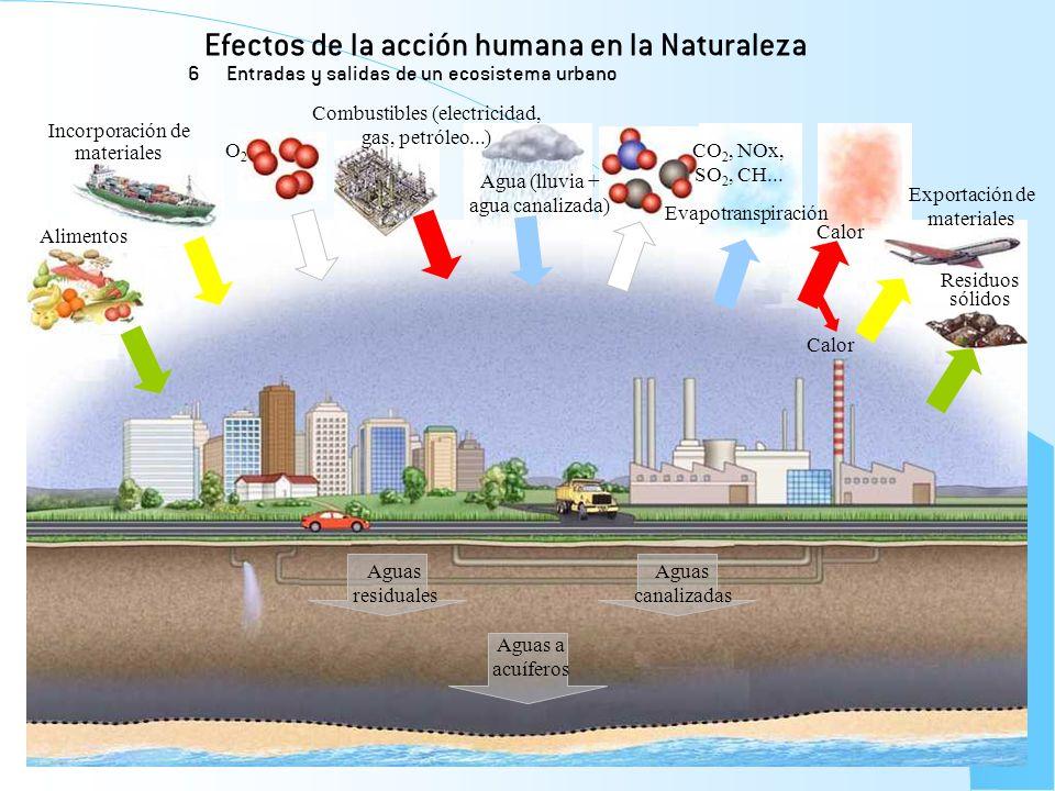 Efectos de la acción humana en la Naturaleza 6 Entradas y salidas de un ecosistema urbano Alimentos Incorporación de materiales O2O2 Combustibles (ele