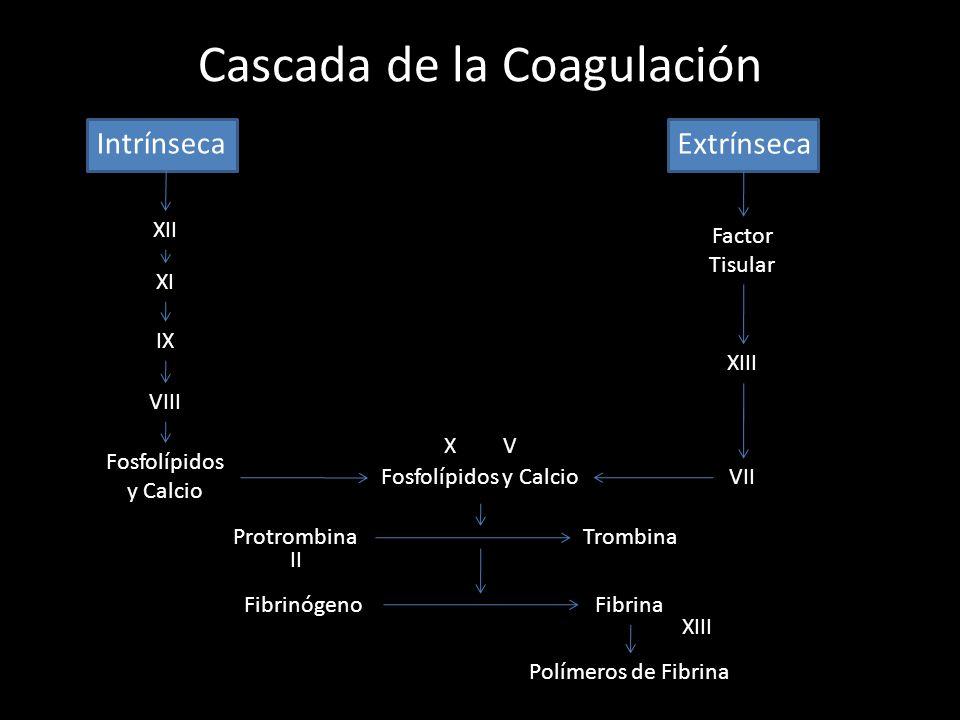 Cascada de la Coagulación Intrínseca Extrínseca XII XI IX VIII XIII VII Factor Tisular Fosfolípidos y Calcio XV ProtrombinaTrombina II FibrinógenoFibr