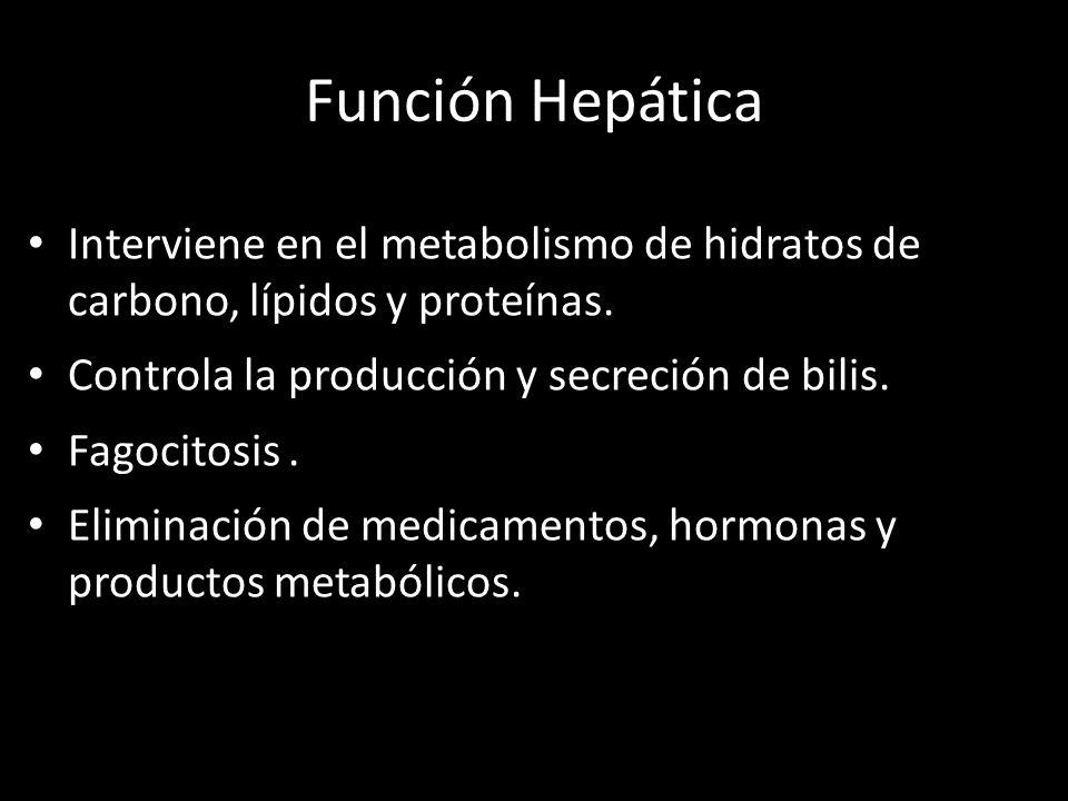 Función Hepática Interviene en el metabolismo de hidratos de carbono, lípidos y proteínas. Controla la producción y secreción de bilis. Fagocitosis. E