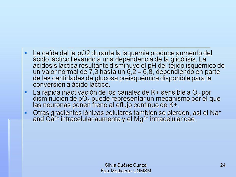Silvia Suárez Cunza Fac. Medicina - UNMSM 24 La caída del la pO2 durante la isquemia produce aumento del ácido láctico llevando a una dependencia de l
