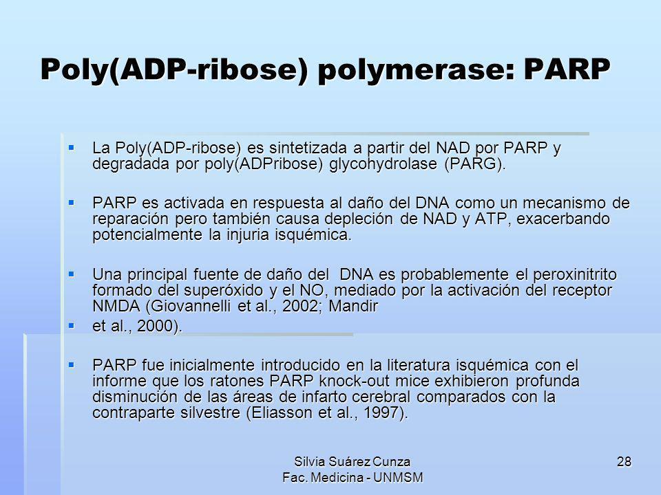 Silvia Suárez Cunza Fac. Medicina - UNMSM 28 Poly(ADP-ribose) polymerase: PARP La Poly(ADP-ribose) es sintetizada a partir del NAD por PARP y degradad