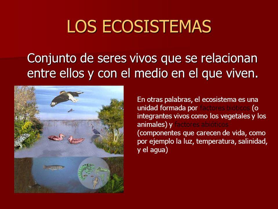 LOS ECOSISTEMAS Conjunto de seres vivos que se relacionan entre ellos y con el medio en el que viven. En otras palabras, el ecosistema es una unidad f