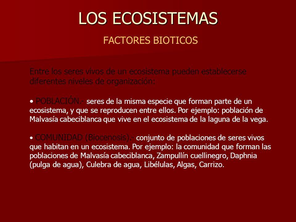 LOS ECOSISTEMAS LOS ECOSISTEMAS FACTORES BIOTICOS Entre los seres vivos de un ecosistema pueden establecerse diferentes niveles de organización: POBLA