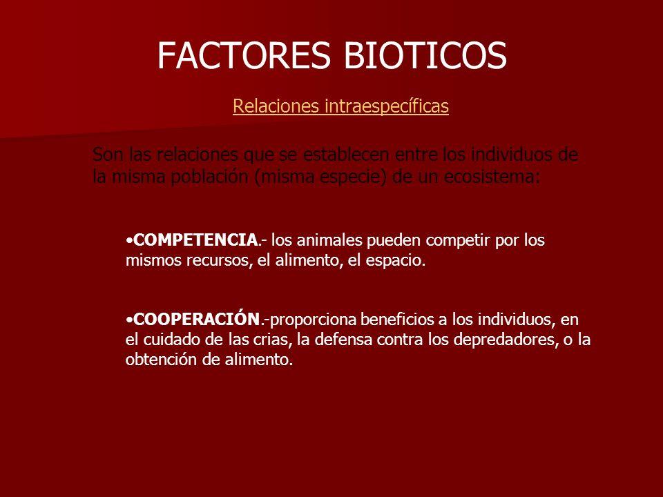 FACTORES BIOTICOS Relaciones intraespecíficas Son las relaciones que se establecen entre los individuos de la misma población (misma especie) de un ec