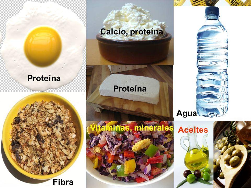 Proteína Calcio, proteína Agua Fibra Vitaminas, minerales Aceites