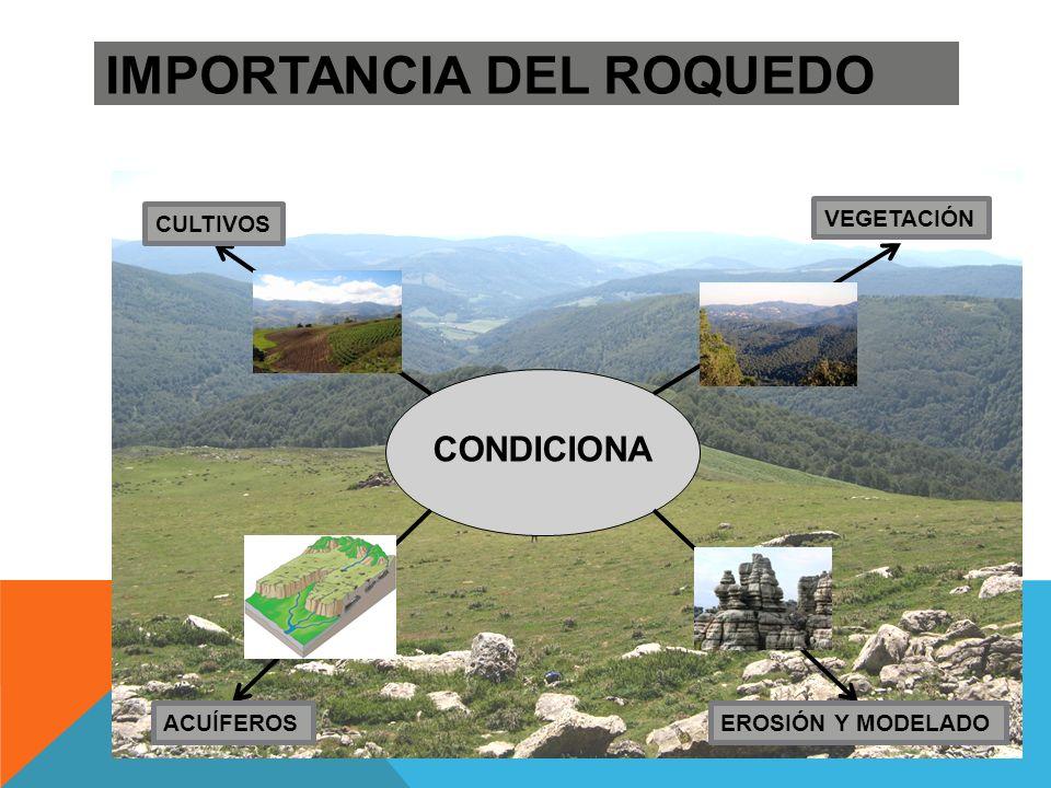 DOLINA o TORCA : Depresión circular de origen kárstico, en cuyo fondo se encuentra la terra rosa.