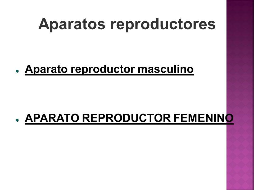Aparatos reproductores Aparato reproductor masculino APARATO REPRODUCTOR FEMENINO