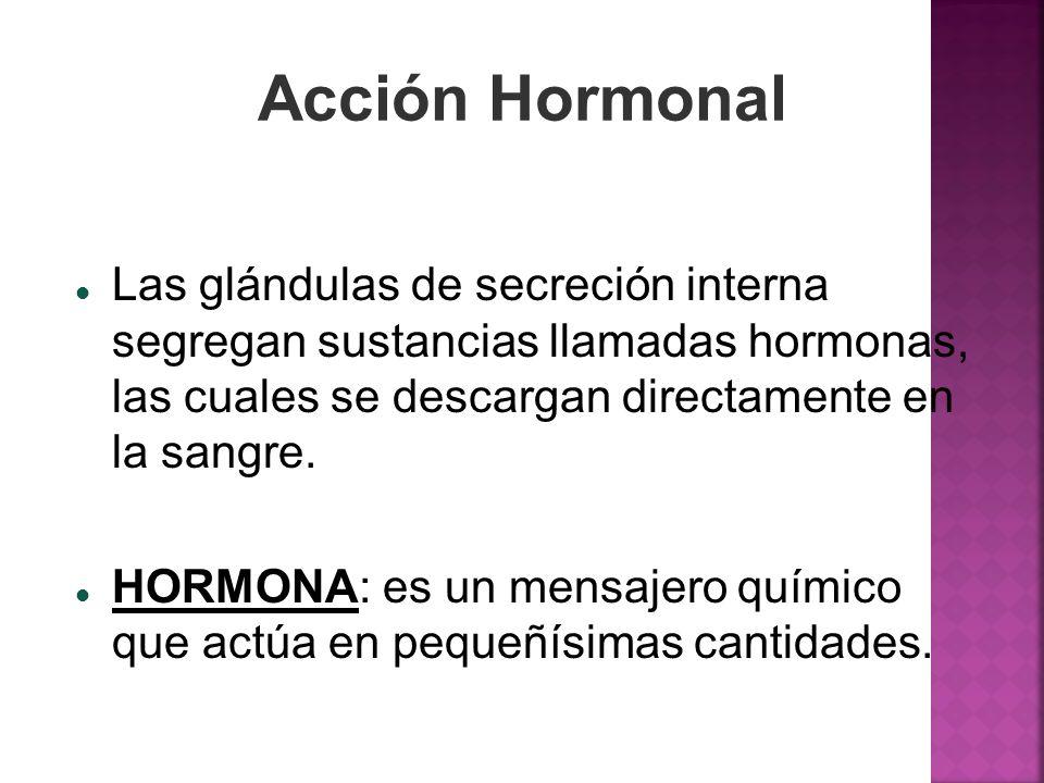 Acción Hormonal Las glándulas de secreción interna segregan sustancias llamadas hormonas, las cuales se descargan directamente en la sangre. HORMONA: