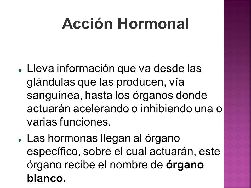 Acción Hormonal Lleva información que va desde las glándulas que las producen, vía sanguínea, hasta los órganos donde actuarán acelerando o inhibiendo