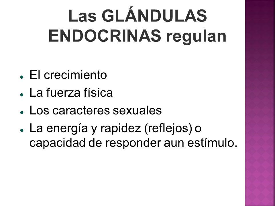 Las GLÁNDULAS ENDOCRINAS regulan El crecimiento La fuerza física Los caracteres sexuales La energía y rapidez (reflejos) o capacidad de responder aun
