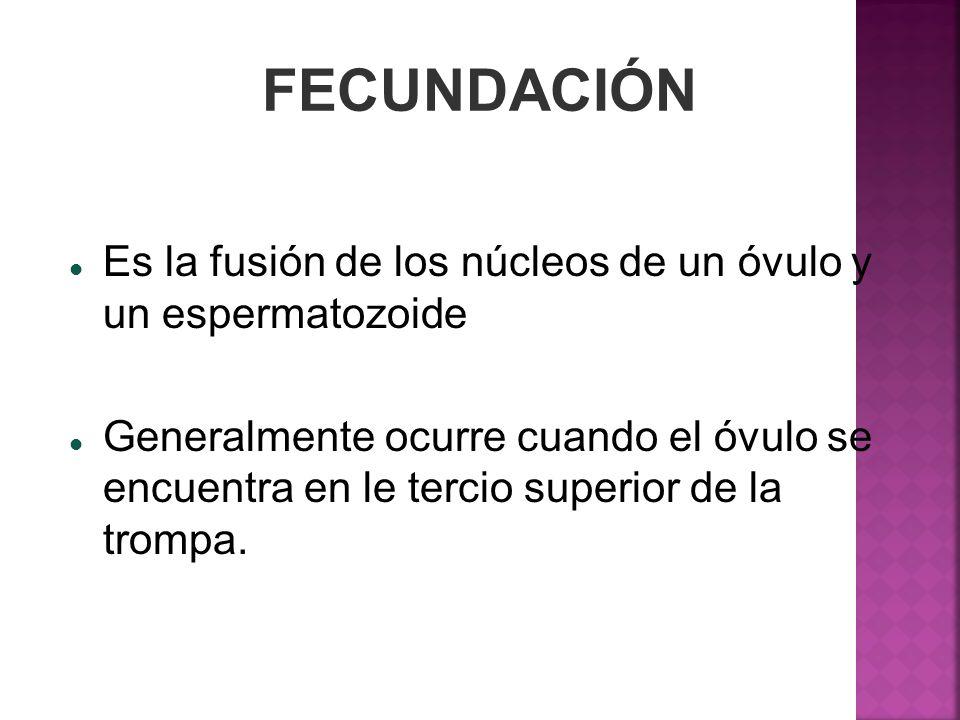 FECUNDACIÓN Es la fusión de los núcleos de un óvulo y un espermatozoide Generalmente ocurre cuando el óvulo se encuentra en le tercio superior de la t