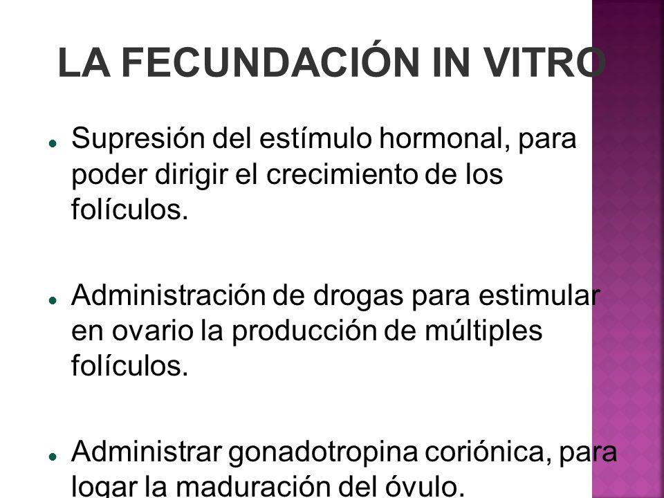 LA FECUNDACIÓN IN VITRO Supresión del estímulo hormonal, para poder dirigir el crecimiento de los folículos. Administración de drogas para estimular e