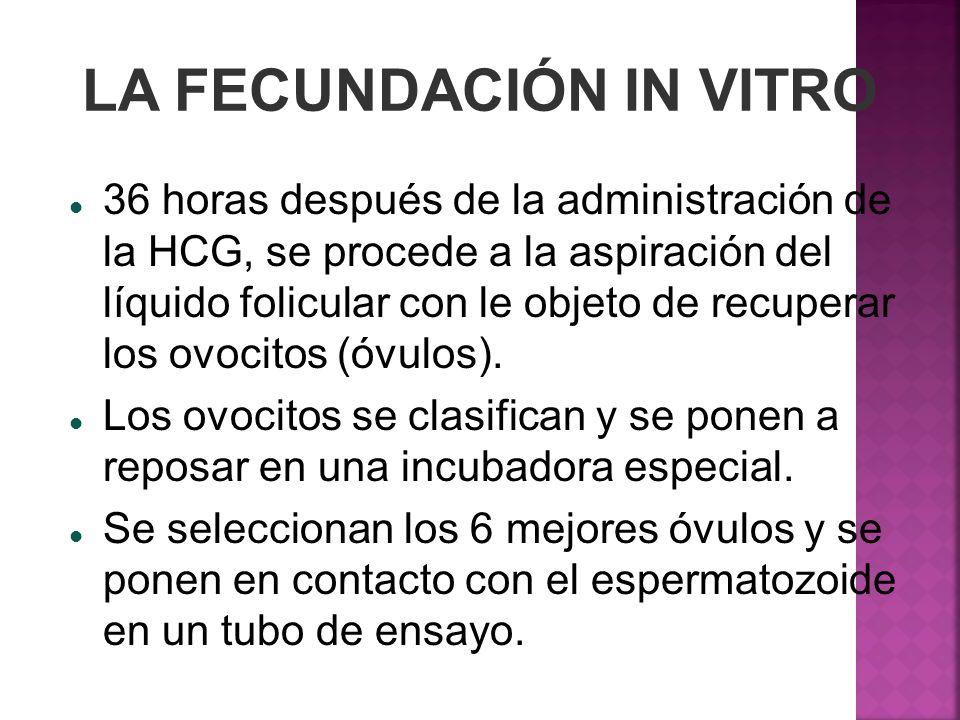 LA FECUNDACIÓN IN VITRO 36 horas después de la administración de la HCG, se procede a la aspiración del líquido folicular con le objeto de recuperar l