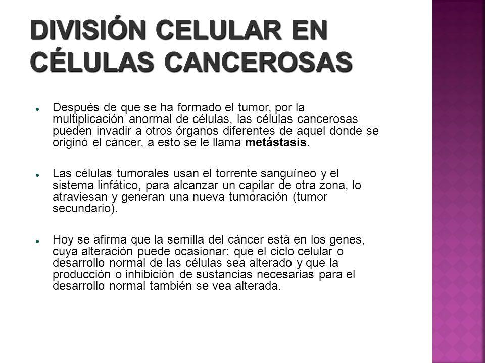 DIVISIÓN CELULAR EN CÉLULAS CANCEROSAS Después de que se ha formado el tumor, por la multiplicación anormal de células, las células cancerosas pueden