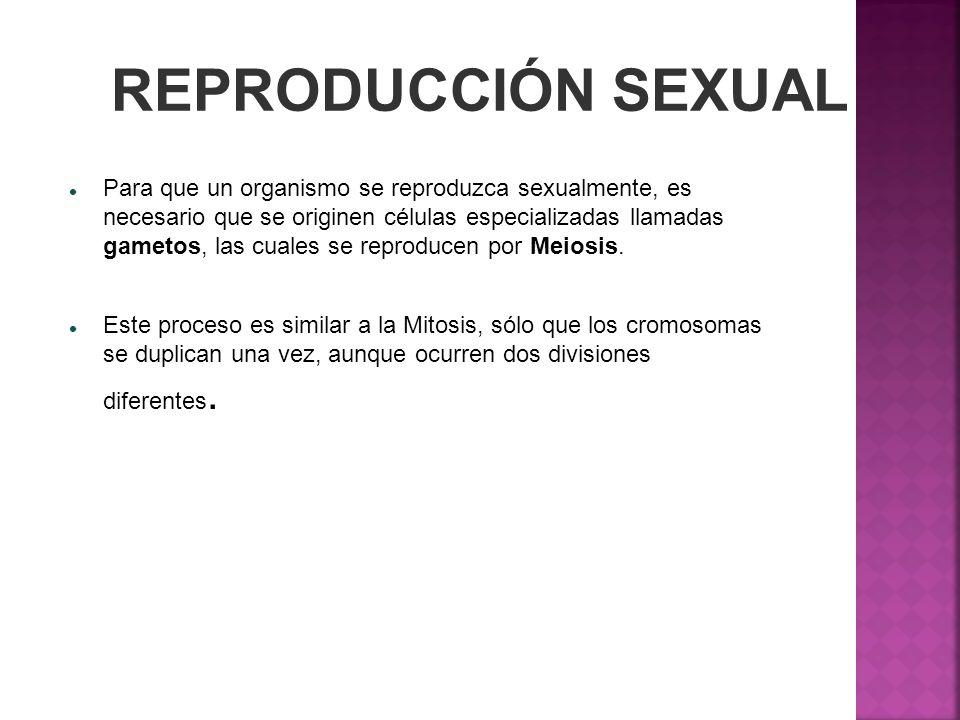 REPRODUCCIÓN SEXUAL Para que un organismo se reproduzca sexualmente, es necesario que se originen células especializadas llamadas gametos, las cuales