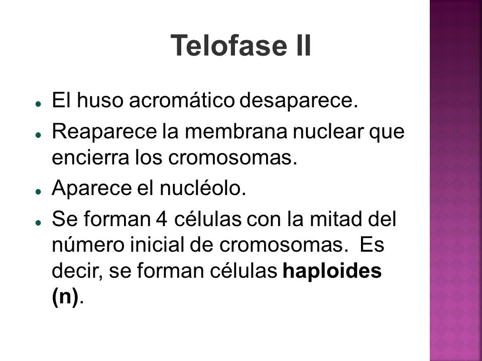Telofase II El huso acromático desaparece. Reaparece la membrana nuclear que encierra los cromosomas. Aparece el nucléolo. Se forman 4 células con la