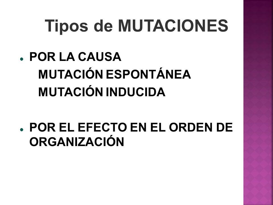 Tipos de MUTACIONES POR LA CAUSA POR LA CAUSA MUTACIÓN ESPONTÁNEA MUTACIÓN INDUCIDA POR EL EFECTO EN EL ORDEN DE ORGANIZACIÓN POR EL EFECTO EN EL ORDE