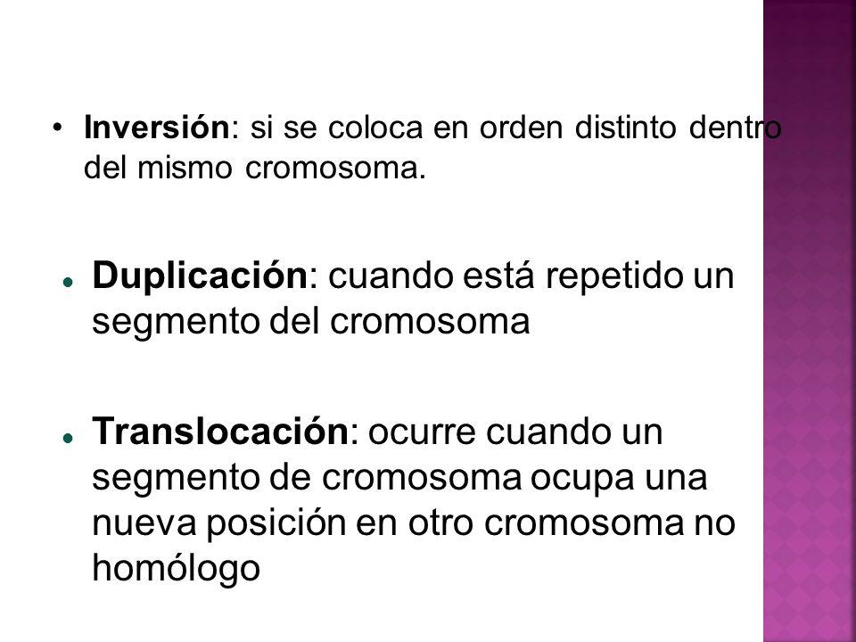 Inversión: si se coloca en orden distinto dentro del mismo cromosoma. Duplicación: cuando está repetido un segmento del cromosoma Translocación: ocurr