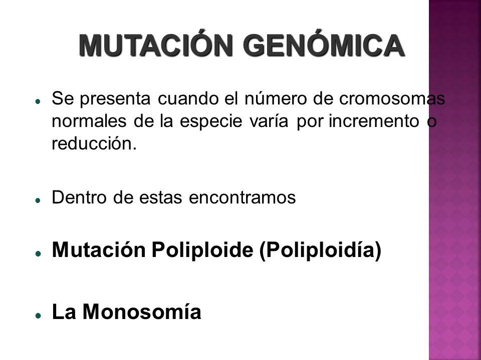 MUTACIÓN GENÓMICA Se presenta cuando el número de cromosomas normales de la especie varía por incremento o reducción. Dentro de estas encontramos Muta