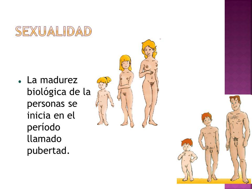 La madurez biológica de la personas se inicia en el período llamado pubertad.
