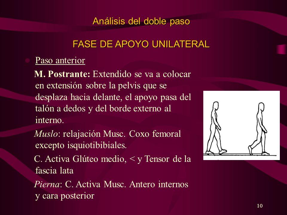 10 Análisis del doble paso FASE DE APOYO UNILATERAL Paso anterior M. Postrante: Extendido se va a colocar en extensión sobre la pelvis que se desplaza