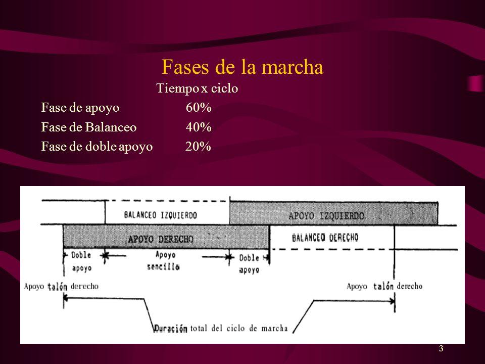 3 Fases de la marcha Tiempo x ciclo Fase de apoyo 60% Fase de Balanceo 40% Fase de doble apoyo 20%
