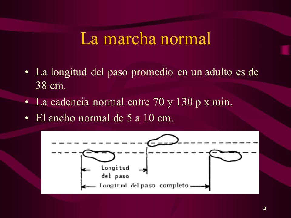 5 ANALISIS DEL DOBLE PASO I Fase doble apoyo: Ambos pies sobre el suelo, el movimiento se desarrolla del talón hacia los dedos, el pie posterior, sobre la bóveda de movimiento ( borde interno), y el pie anterior sobre la bóveda de apoyo ( borde externo).