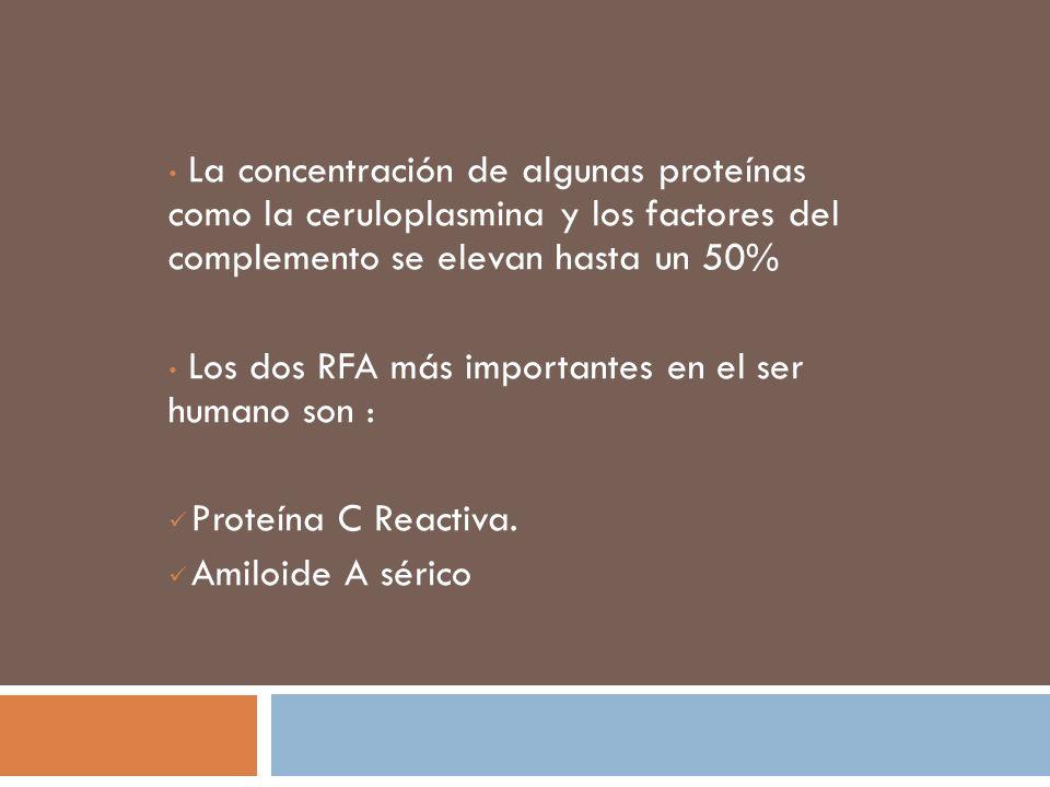 La concentración de algunas proteínas como la ceruloplasmina y los factores del complemento se elevan hasta un 50% Los dos RFA más importantes en el s