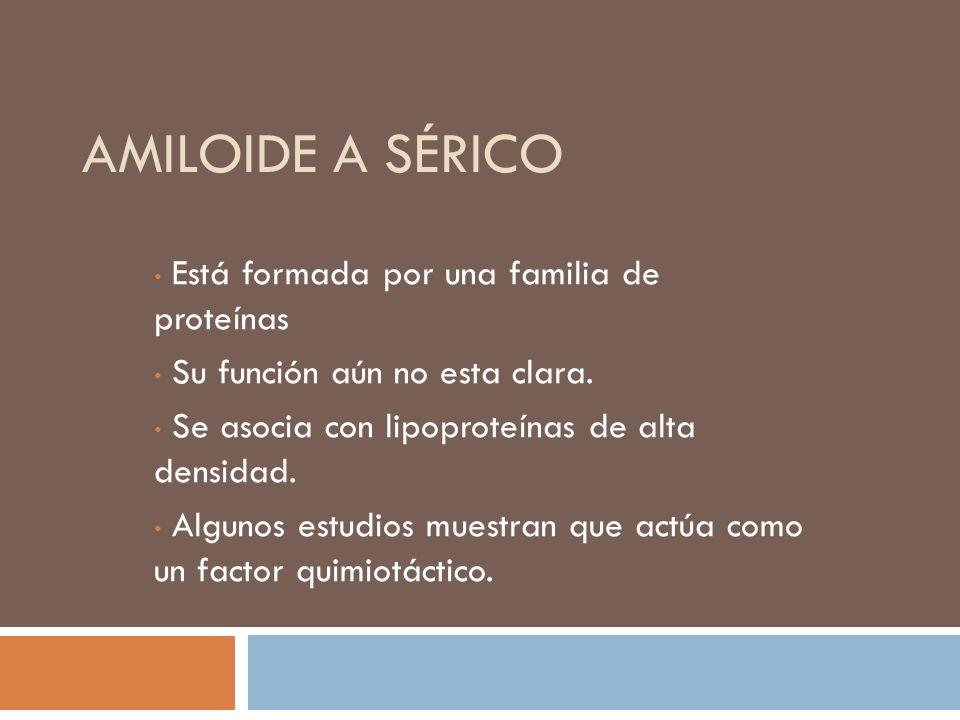AMILOIDE A SÉRICO Está formada por una familia de proteínas Su función aún no esta clara. Se asocia con lipoproteínas de alta densidad. Algunos estudi