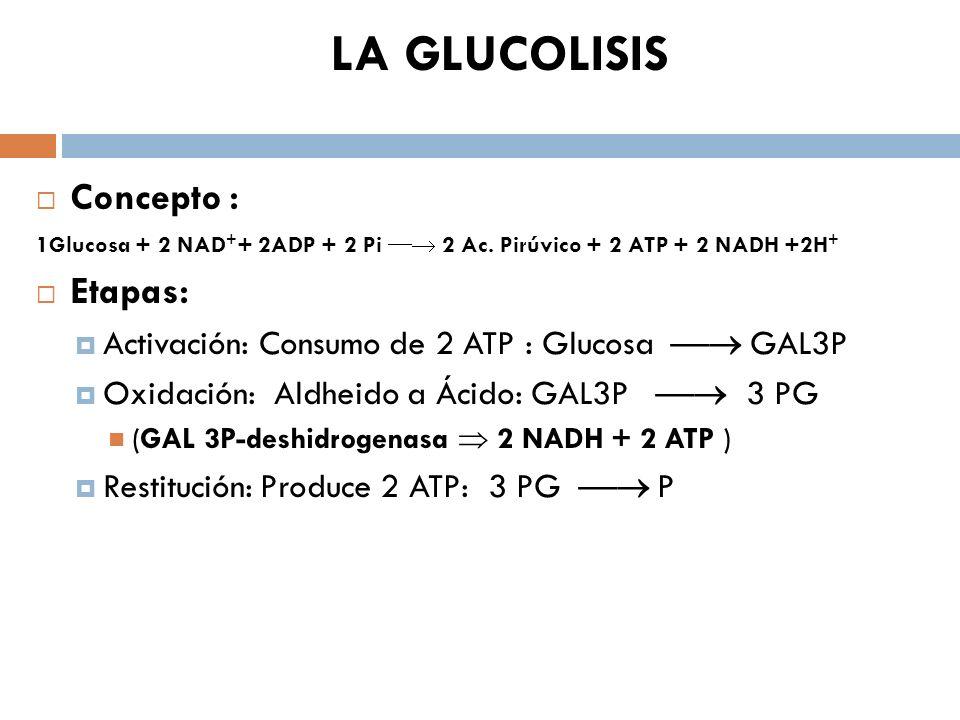 LA GLUCOLISIS Concepto : 1Glucosa + 2 NAD + + 2ADP + 2 Pi 2 Ac. Pirúvico + 2 ATP + 2 NADH +2H + Etapas: Activación: Consumo de 2 ATP : Glucosa GAL3P O