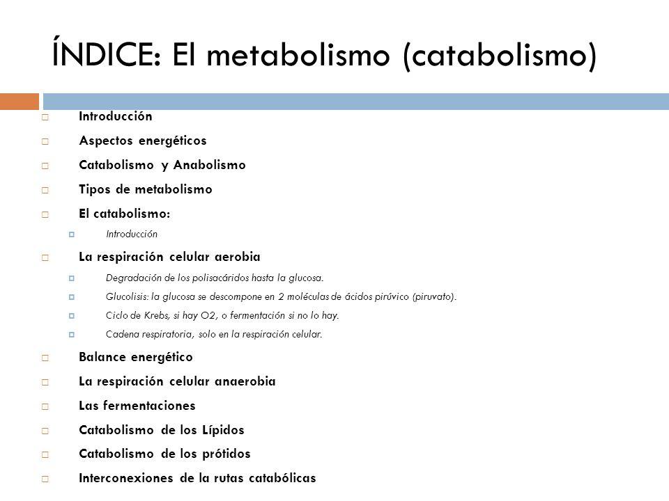 ÍNDICE: El metabolismo (catabolismo) Introducción Aspectos energéticos Catabolismo y Anabolismo Tipos de metabolismo El catabolismo: Introducción La r