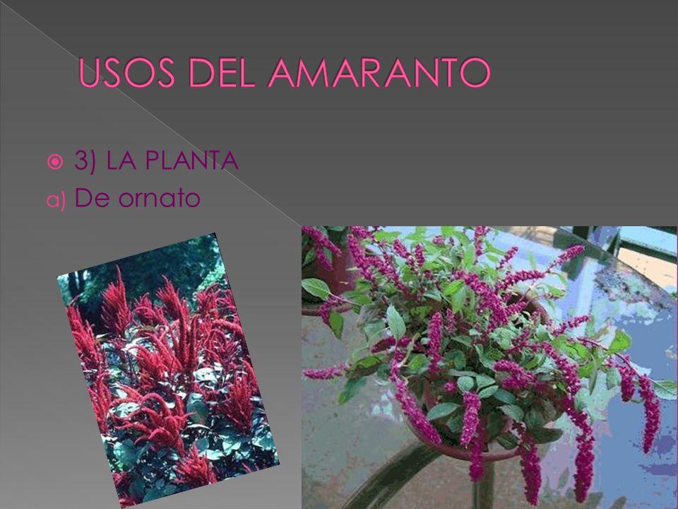 3) LA PLANTA a) De ornato