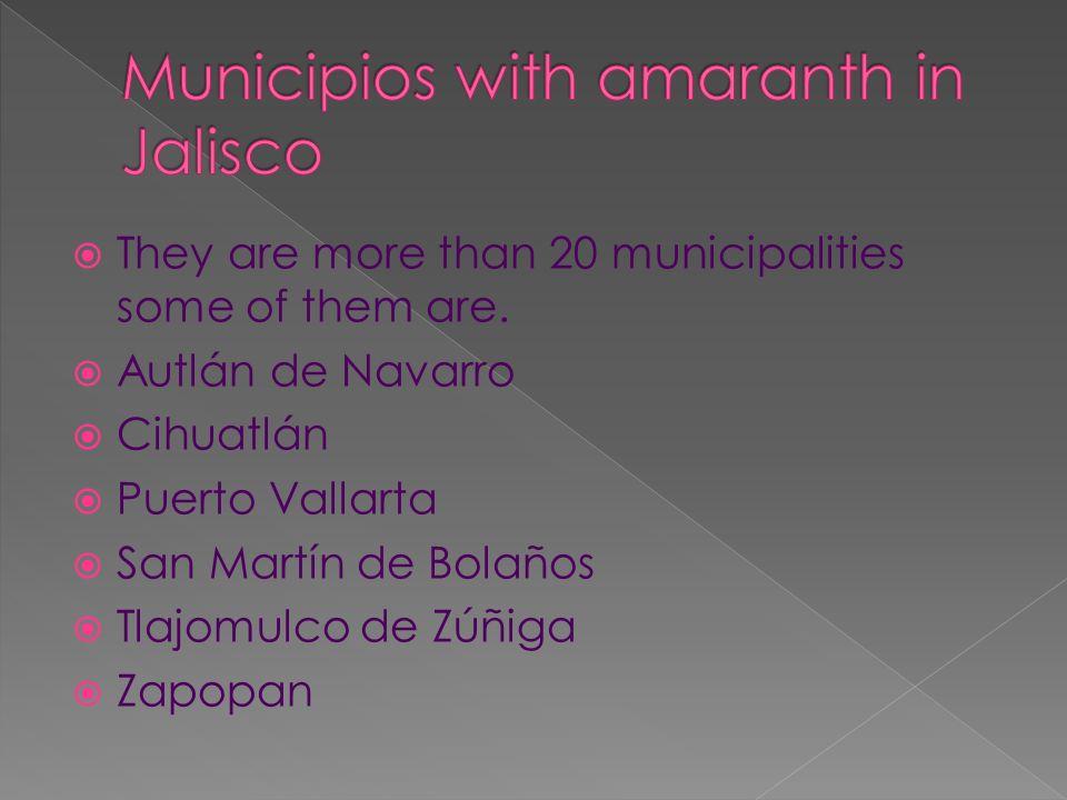 They are more than 20 municipalities some of them are. Autlán de Navarro Cihuatlán Puerto Vallarta San Martín de Bolaños Tlajomulco de Zúñiga Zapopan