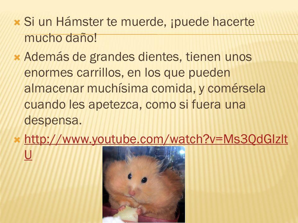 Además, los hamsters son omnívoros.¿Qué quiere decir eso.