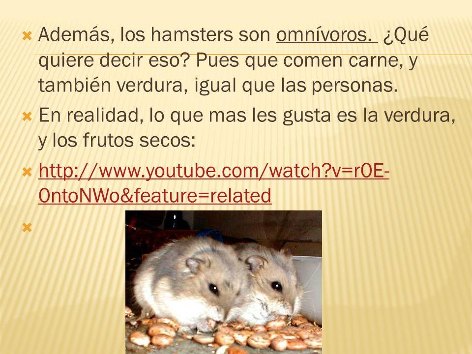 Además, los hamsters son omnívoros. ¿Qué quiere decir eso? Pues que comen carne, y también verdura, igual que las personas. En realidad, lo que mas le