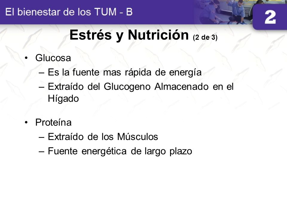 Estrés y Nutrición (2 de 3) Glucosa –Es la fuente mas rápida de energía –Extraído del Glucogeno Almacenado en el Hígado Proteína –Extraído de los Músc