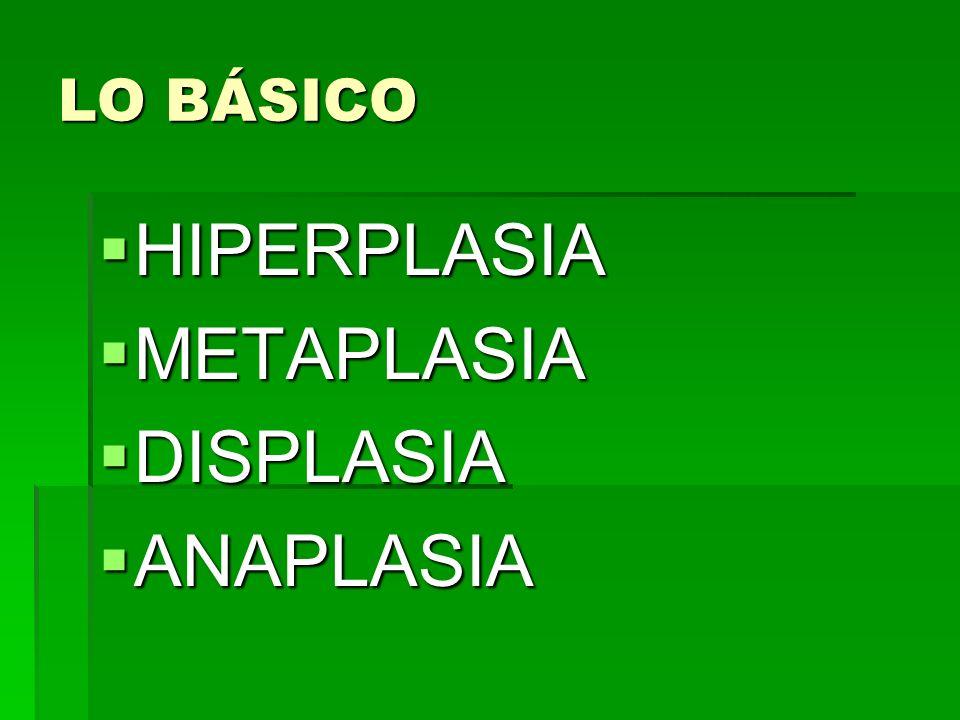 LO BÁSICO HIPERPLASIA HIPERPLASIA METAPLASIA METAPLASIA DISPLASIA DISPLASIA ANAPLASIA ANAPLASIA