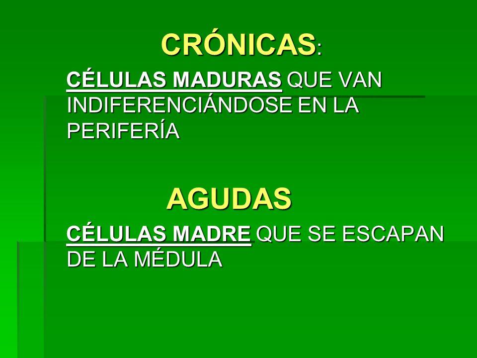 CRÓNICAS : CRÓNICAS : CÉLULAS MADURAS QUE VAN INDIFERENCIÁNDOSE EN LA PERIFERÍA CÉLULAS MADURAS QUE VAN INDIFERENCIÁNDOSE EN LA PERIFERÍA AGUDAS AGUDA