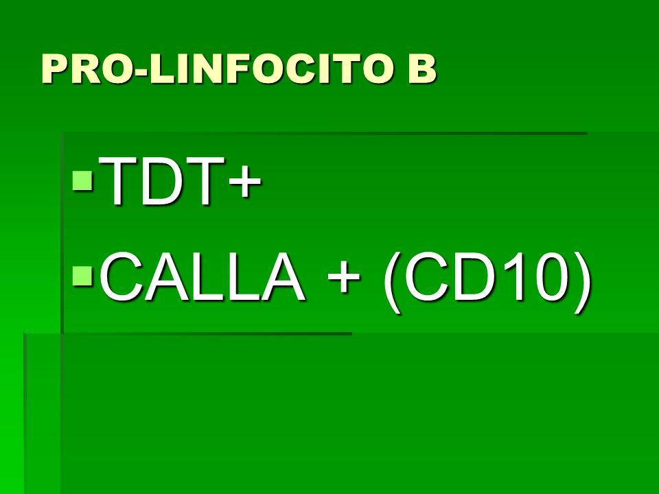 PRO-LINFOCITO B TDT+ TDT+ CALLA + (CD10) CALLA + (CD10)