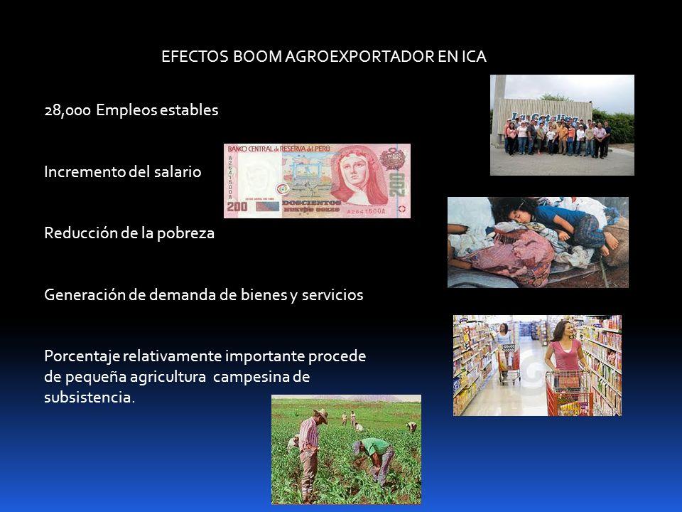 EFECTOS BOOM AGROEXPORTADOR EN ICA 28,000 Empleos estables Incremento del salario Reducción de la pobreza Generación de demanda de bienes y servicios