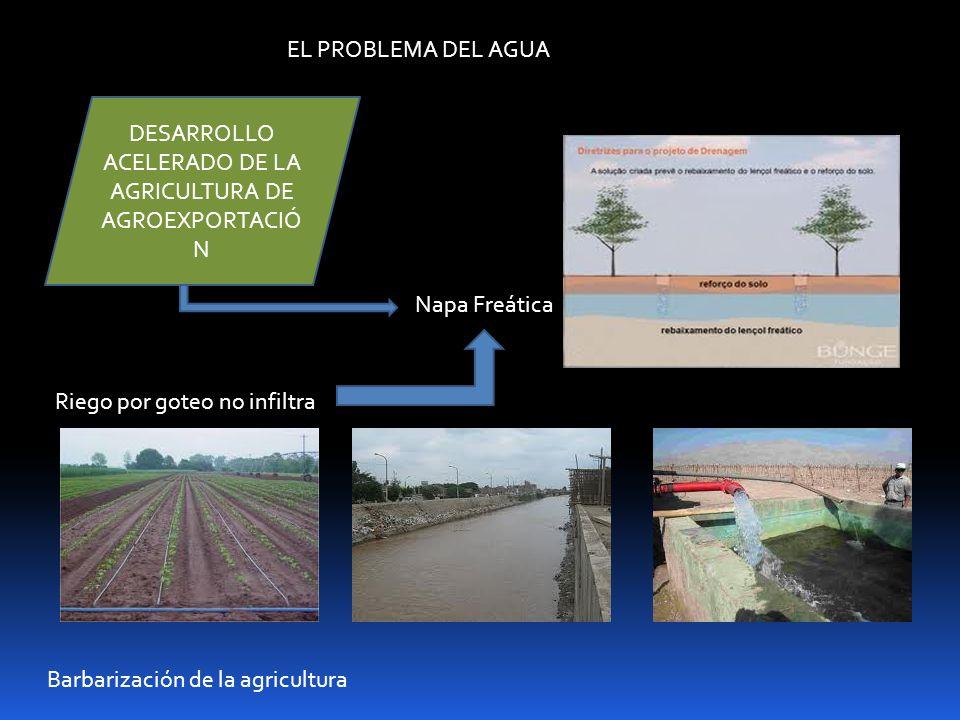 EL PROBLEMA DEL AGUA Napa Freática DESARROLLO ACELERADO DE LA AGRICULTURA DE AGROEXPORTACIÓ N Riego por goteo no infiltra Barbarización de la agricult